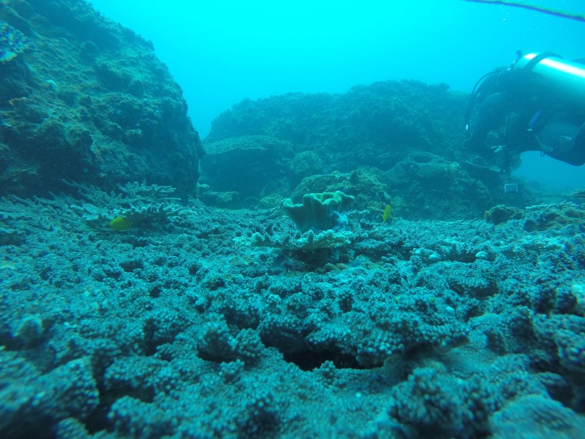 Double Dive Sunshine Coast Reefs