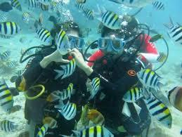 Discover Scuba Dive Sunshine Coast Reefs Single Dive