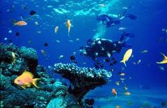 Discover Scuba Dive, Moreton Island Ship Wrecks