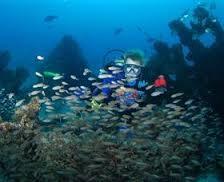 Discover Scuba Dive Tangalooma Wrecks, Moreton Island - Double Dive