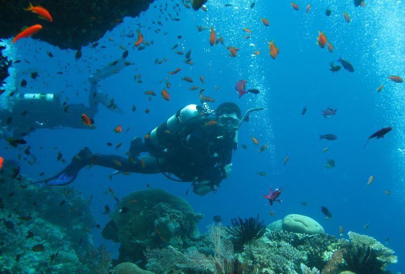 Scuba Diving Noosa Jew Shoal - Double Dive