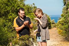 Aboriginal Food, Culture, Cave & Didge Tour