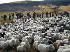 Sheep round up - Rangárvallaafrétt