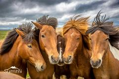 Horse round up - Skrapatungurett