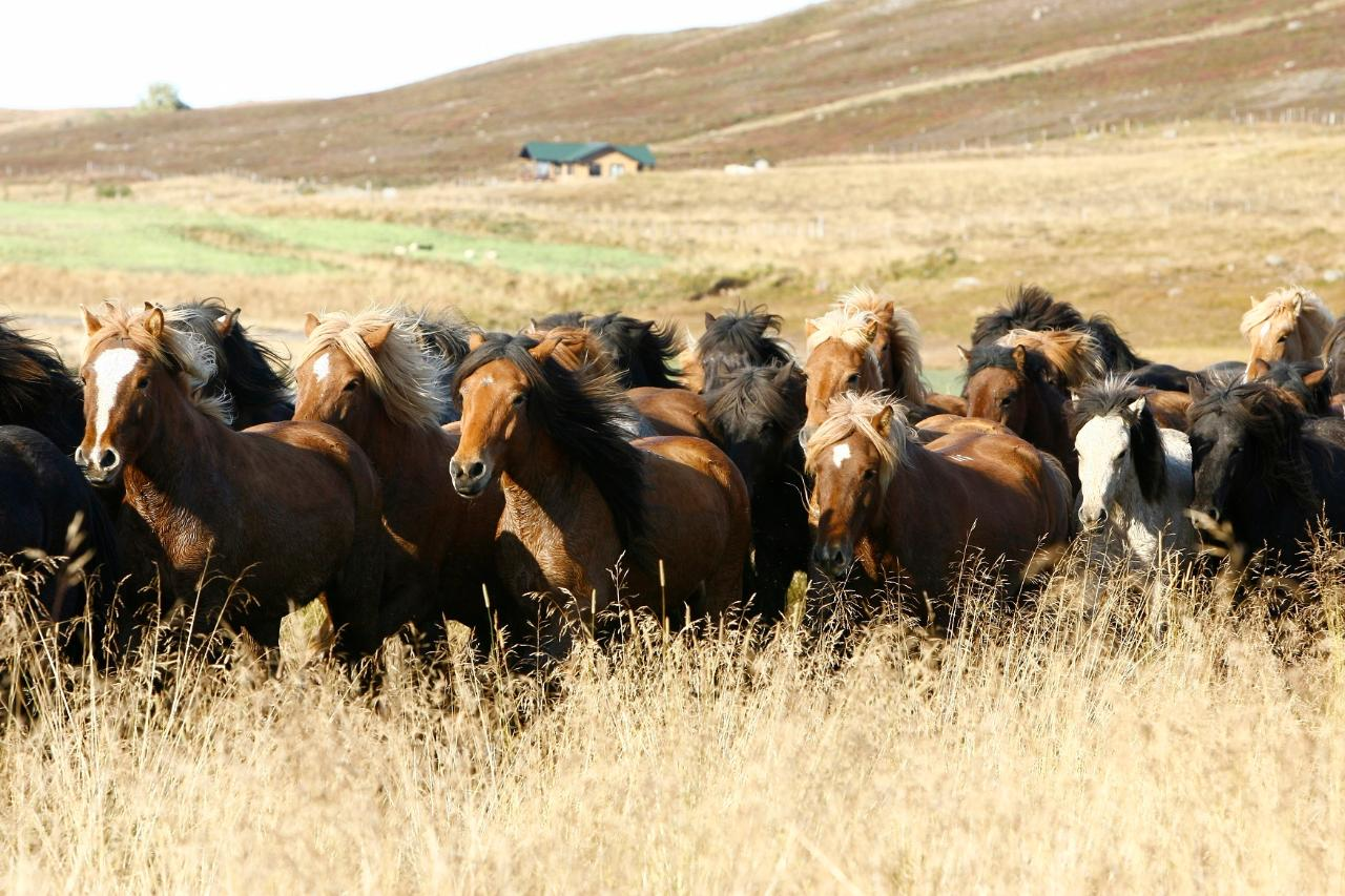Horse round up - Vididalstungurett