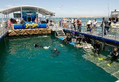 In Sea Aquarium Swim 10am