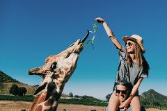 OPEN GIRAFFE HIKE