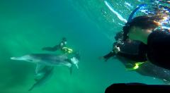 Swim with Wild Dolphins (including Perth CBD & Burswood Crown Hotel transfers)