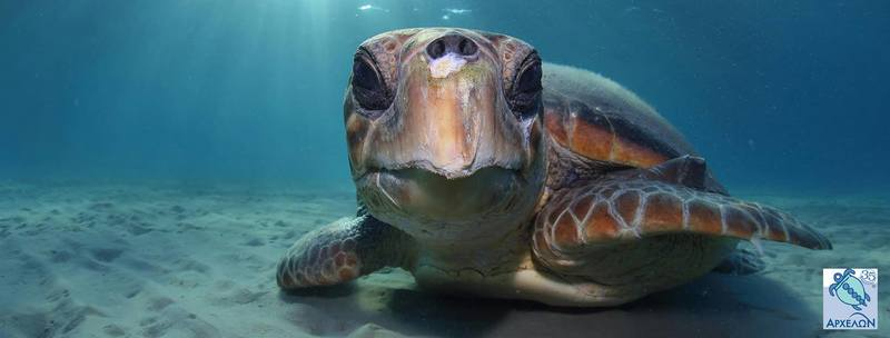 """Private transfer to & from your hotel or apartment in Athens to """"ARCHELON"""" Τhe Sea Turtle Protection Society of Greece"""