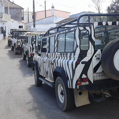 Arbez Zebra Jeep Safari FD