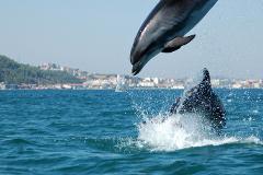 Arrábida Dolphins & Jeep Safari