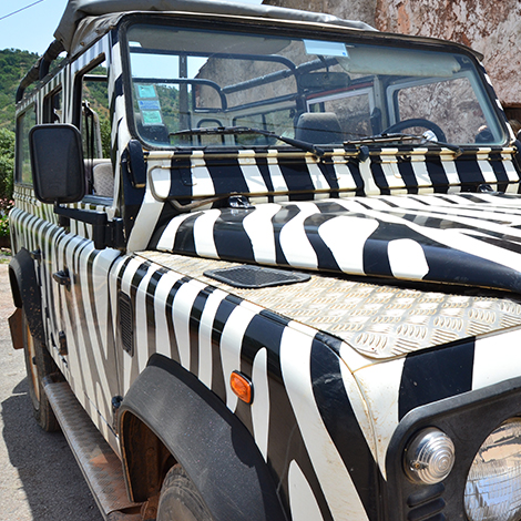 Arbez Zebra Jeep Safari Superday