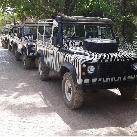 Arbez Zebra Jeep Safari Hd Extremo Ambiente Reservations
