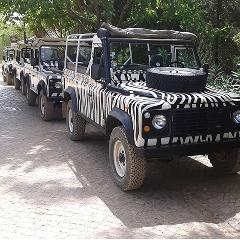 Arbez Zebra Jeep Safari HD