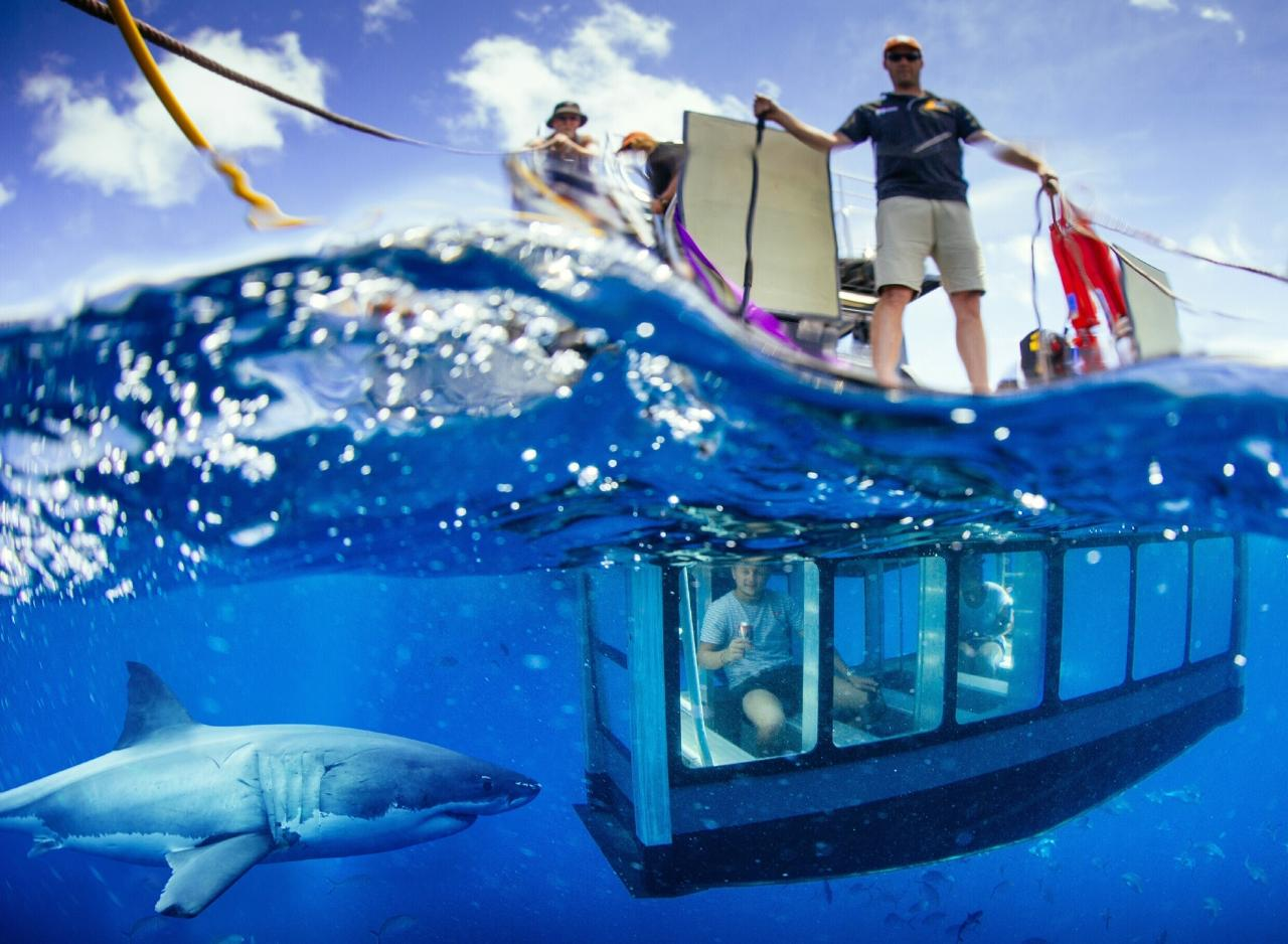 White Shark Tour