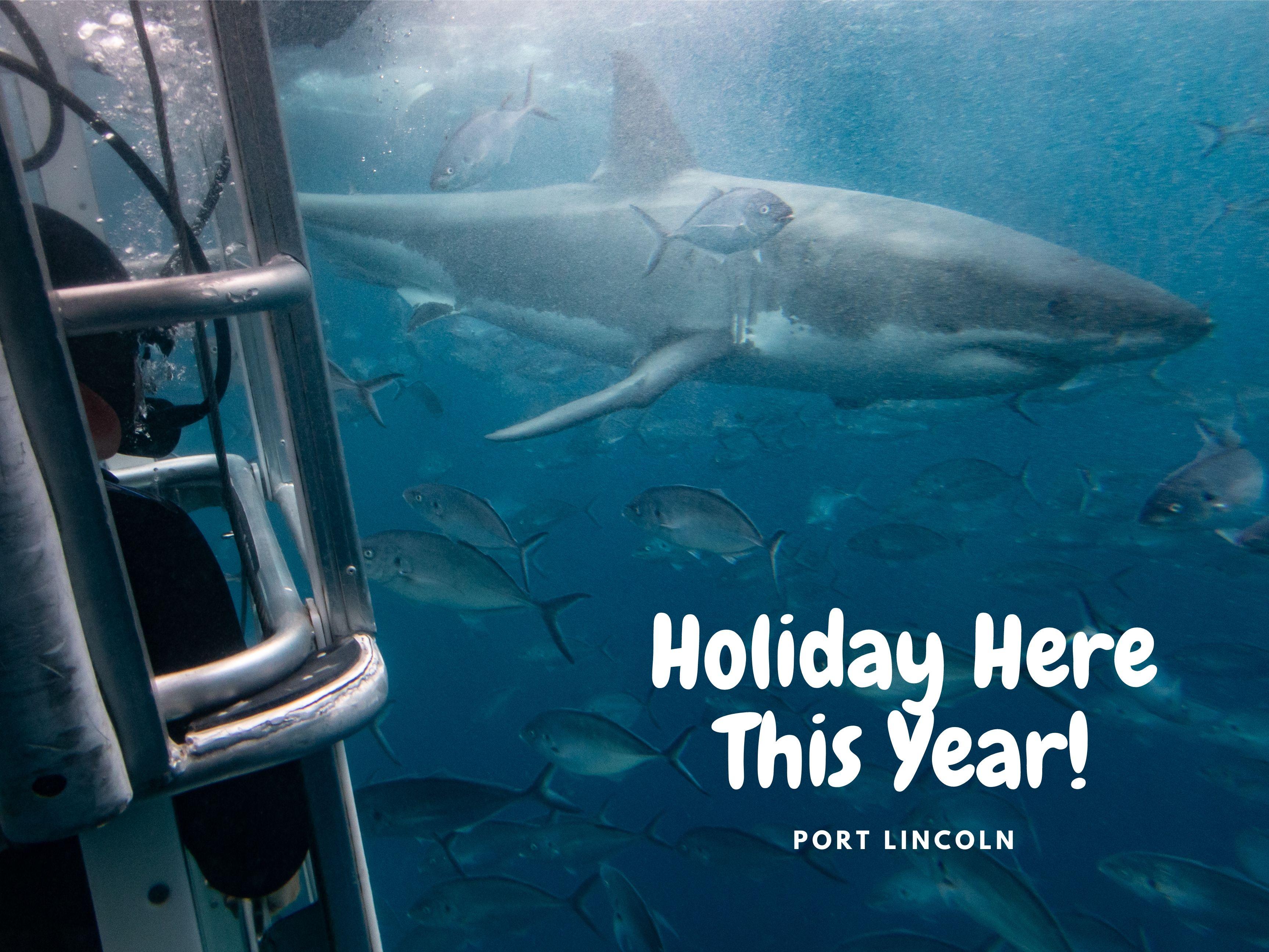Marine Volunteer Shark Trip