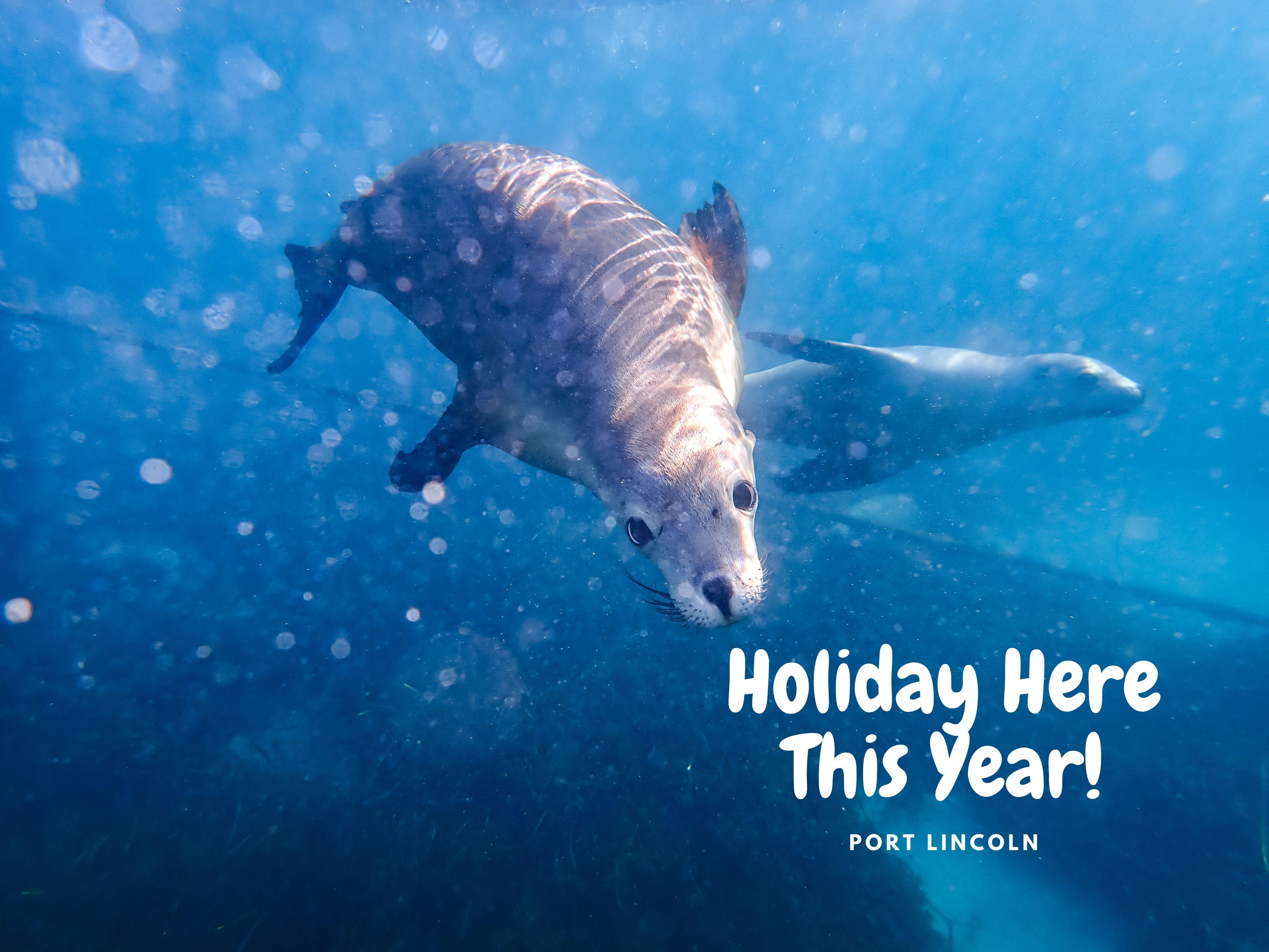 Marine Volunteer Sea Lions Trip