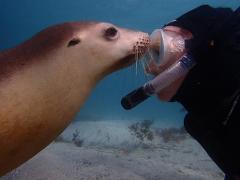 Swim With The Sea Lions