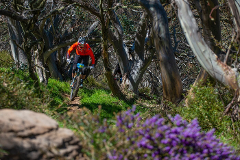 Intermediate to Advanced Gravity Enduro Skills Clinic - Mt Buller