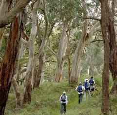 1 Day Self Guided Walk: Blanket Bay to Apollo Bay (22km).Departs Wed / Thurs 8.30am