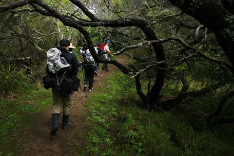 4 Day Self Guided Walk: Apollo Bay to Milanesia Gate (62.5km) Departs Sunday