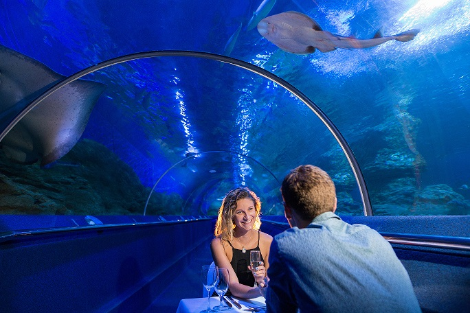 Register for Upcoming Dine Beneath the Seas