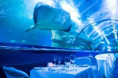 Dine Beneath the Sea - Saturday 15th September