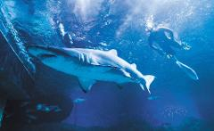 Get Wet this Winter - Snorkel with Sharks SAVE 20%
