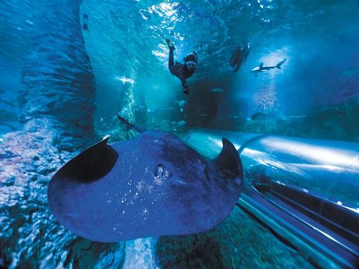 Get Wet at AQWA - Snorkel with Sharks SAVE 20%