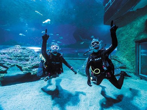Get Wet at AQWA - Dive with Sharks SAVE 20%