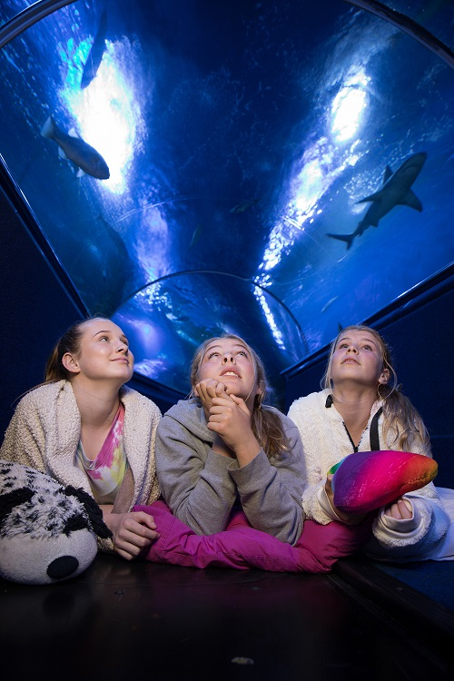 Shark Sleepovers (7-12 Years)