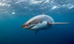 Post Traumatic Shark Syndrome!  - Guest Speaker