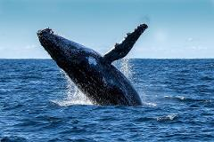 Whale Watching Tour and AQWA Entry Combo