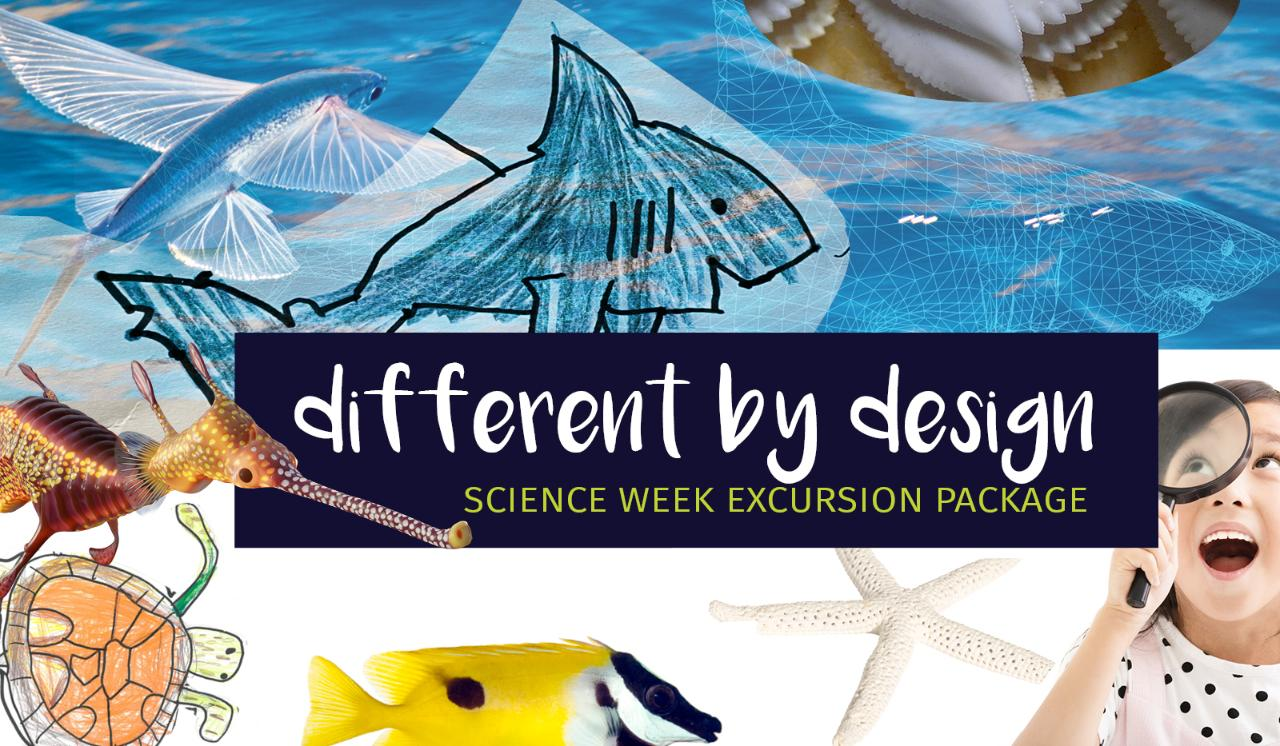 Excursion Package - Visit & Different By Design Program (full day)