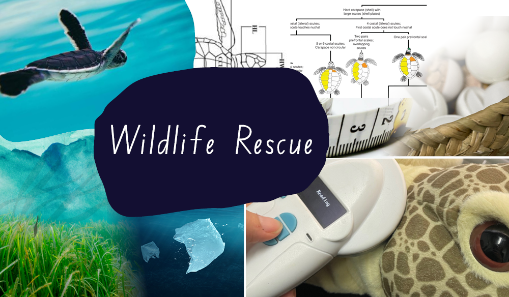 Excursion Package - Visit & Wildlife Rescue Activity (+1 hour)