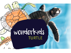 Wonder Kids Workshop  - Turtles (ages 3-5)