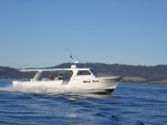 Wai Tui Half Day Morning Offshore Private Sole Boat Fishing Charter (max 16 persons)