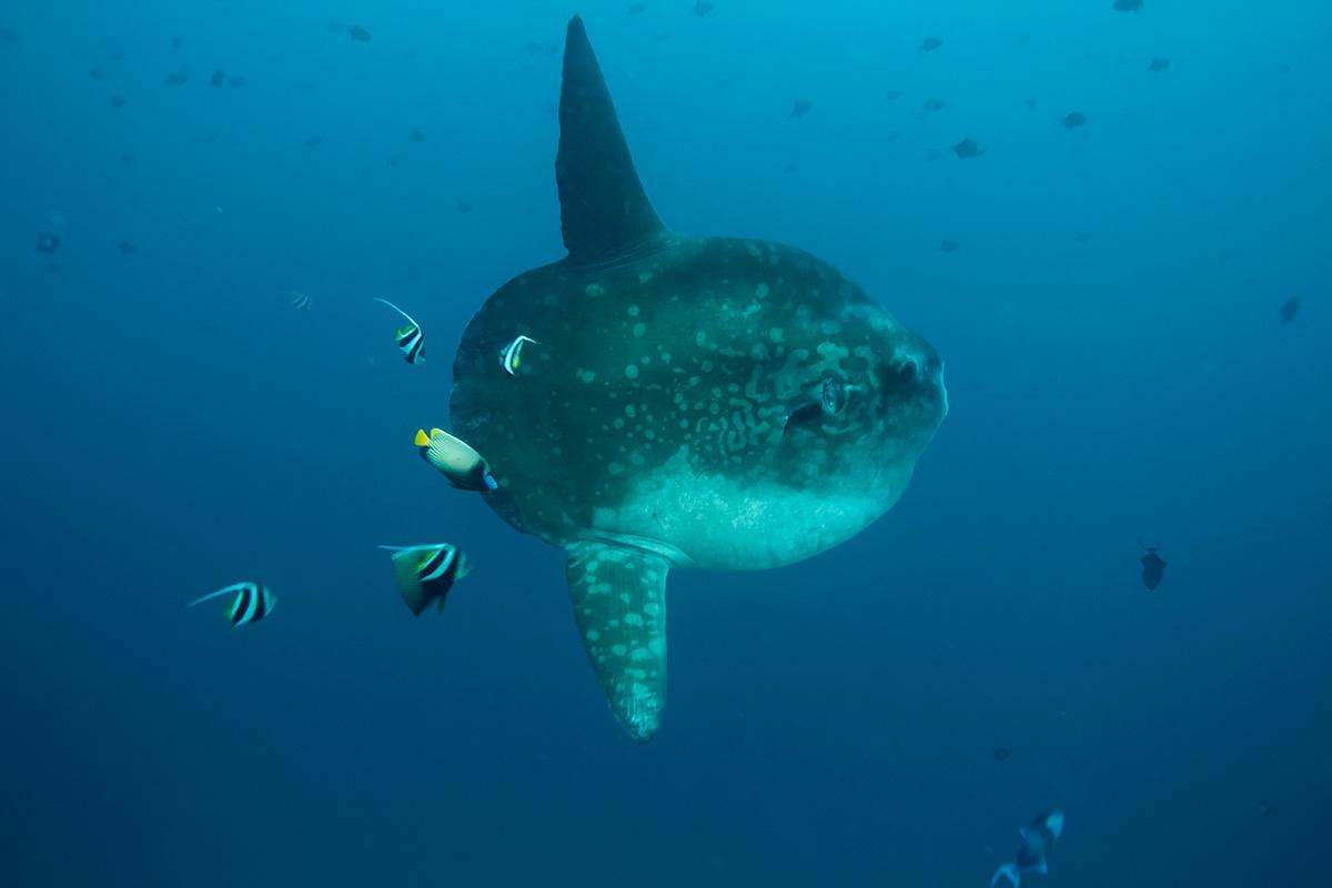 2 certified fun dives at Nusa Penida's Crystal Bay & Drift, Bali dive sites