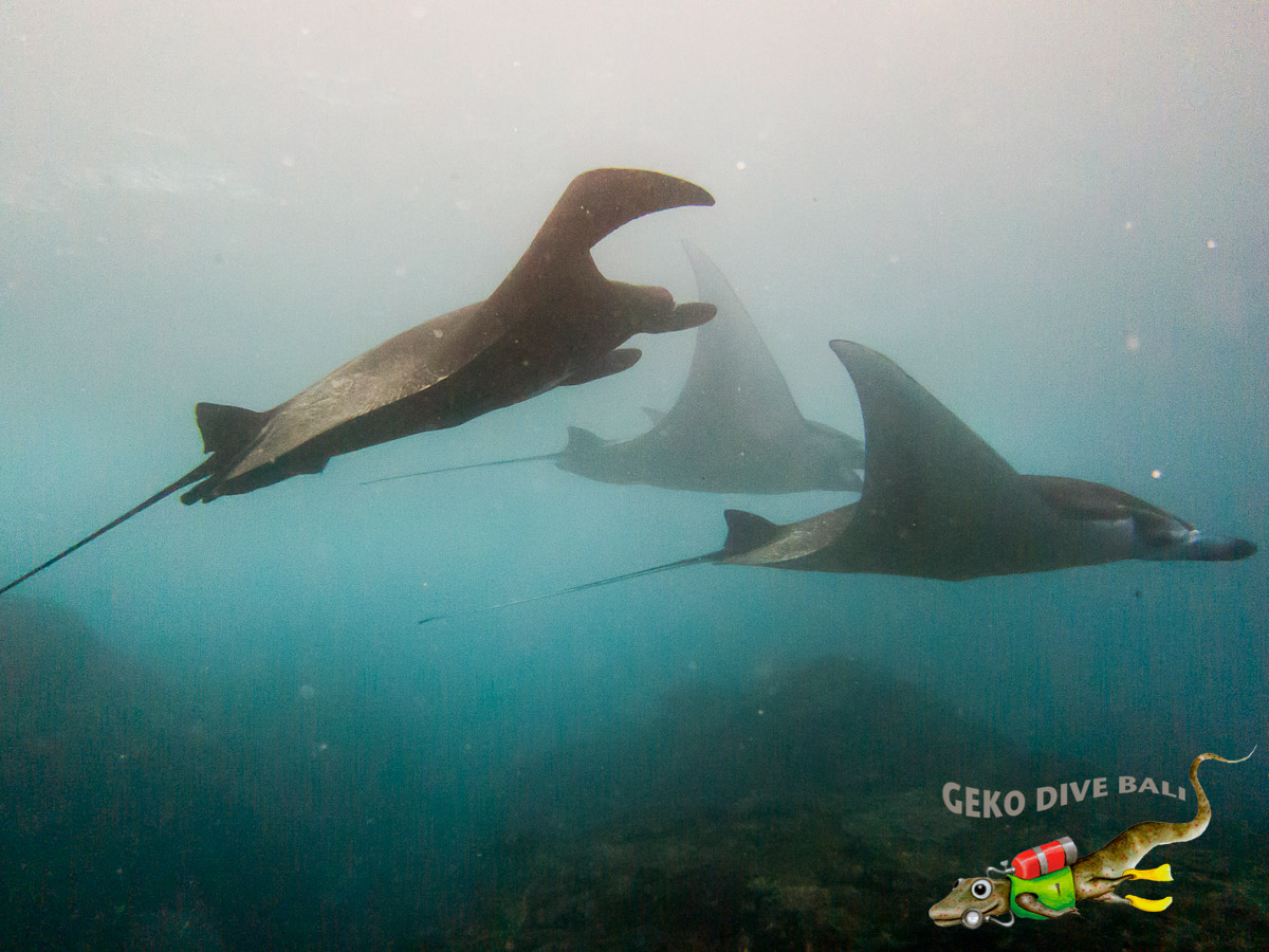 2 certified fun dives at Nusa Penida's Manta Point & Drift, Bali dive sites