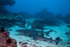 2 certified fun dives at Padang Bai, Bali local dive sites for corals, sharks and turtles