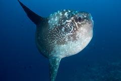 2 certified fun dives at Gili Tepekong & Mimpang, Bali dive sites