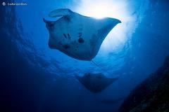 VIP Exclusive Scuba Diving Tour