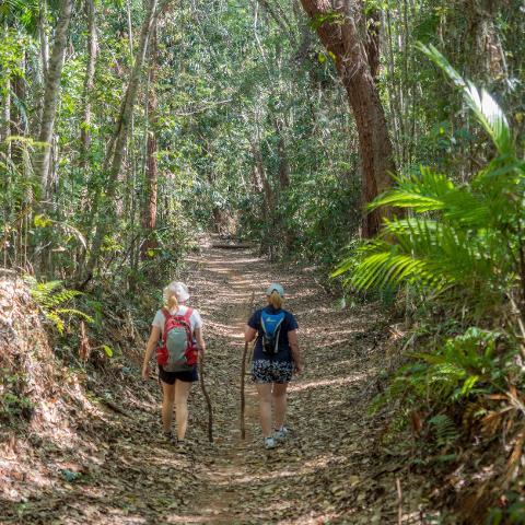 Mowbray Falls Bush Walking Tour