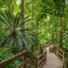 Daintree Adventure Day