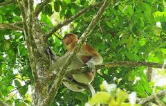 2-Day Bako National Park (H2)