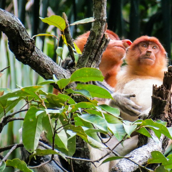 Wetlands Wildlife Morning Cruise (W2)