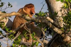 Best of Borneo Wildlife: Orangutan, Turtle, Kinabatangan (5D4N)