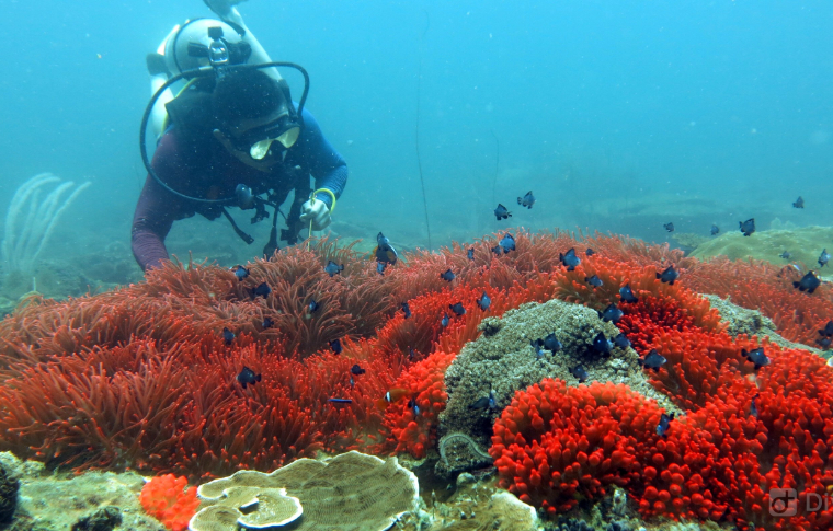 Dive Miri Coral Reefs National Park (D3)