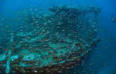 Shipwreck Adventure Dive Kuching (D1)