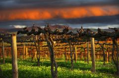 Barossa Full Day Private Wine Tour in modern Mercedes